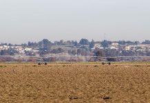 Sequía en los campos gaditanos